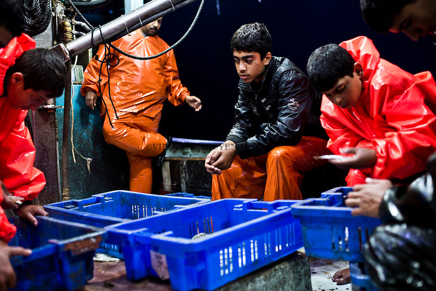 Gaza sea: young fishermen of the crew are looking at their catch, mainly sardines and red mullet. Tonight, it's not a very big one, they just wish they could go further...<br /> <br /> Mer de Gaza: les jeunes p&ecirc;cheurs de l'&eacute;quipage regarde leur prise: principalement des sardines et des rougets. Ce soir, ce n'est pas terrible, ils esp&egrave;rent juste de pouvoir p&ecirc;cher plus loin.