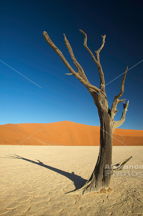 Dead Vlei, Namibia - Centuries of fluctuating water tabels have enabled but then abandoned a forest in this dry lake bed.  Now called the Dead vlei, or pan, it is a popular destination near the famous Sossusvlei.