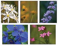 Prairie Wildflowers Note Card set