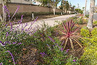 A view from within the plants landscaping the Harbor Boulevard Cornerstone Bike Trail in Costa Mesa, California.  Sages, a bromeliad, and other small plants line the pathway.  The landscape architecture work on the project was done by David Volz Design.