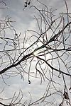 A web of frosty twigs extend from a branch set against a cloud-mottled sky