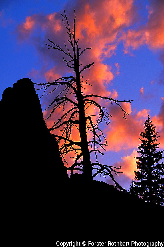The silhouette of Pumpelly Pillar rises above pine trees in the Two Medicine district of Glacier National Park, Montana, just after sunset during summer.<br /> <br /> &copy; Michael Forster Rothbart<br /> www.mfrphoto.com <br /> 607-267-4893 o 607-432-5984<br /> 5 Draper St, Oneonta, NY 13820<br /> 86 Three Mile Pond Rd, Vassalboro, ME 04989<br /> info@mfrphoto.com<br /> Photo by: Michael Forster Rothbart<br /> Date: 08/2002     File#:   color slide.<br /> ----------<br /> Original caption:<br /> The silhouette of Pumpelly Pillar rises above pine trees in the Two Medicine district of Glacier National Park, just after sunset during summer. During a week-long UW-Madison Service And Learning Adventure (SALA) summer volunteer trip to the Blackfeet Indian Reservation in northwest Montana, students and alumni volunteered around the reservation.