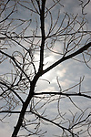 A frosty silhouetted tree branch rests against the morning sky