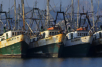 Shrimp fishing vessels, Guaymas, Sonora, Mexico, Fine Art, Landscape.