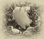 Antique Platnium nesting Birds