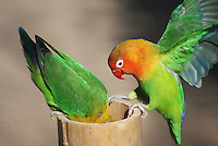 A pair of lovebirds at Parc Pardisio, looking for something.