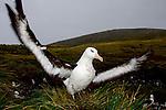 Sub Antarctic Wildlife