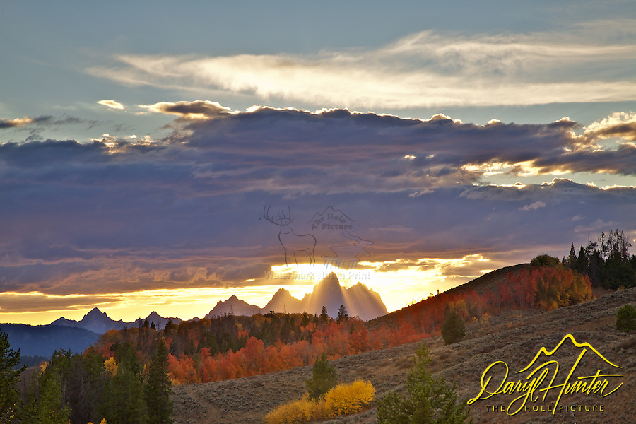The light beams of sunset stream through the Grand Tetons and illuminate the fall colors of red and golden aspen of Jackson Hole wyoming, Crepuscular Rays