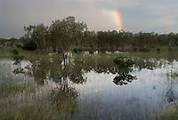 Wetlands landscape in Kakadu National Park with a rainbow following a recent storm.