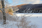 Snowy and Ice Covered Trees on a Winter Morning at Cold Pond in New Hampshire