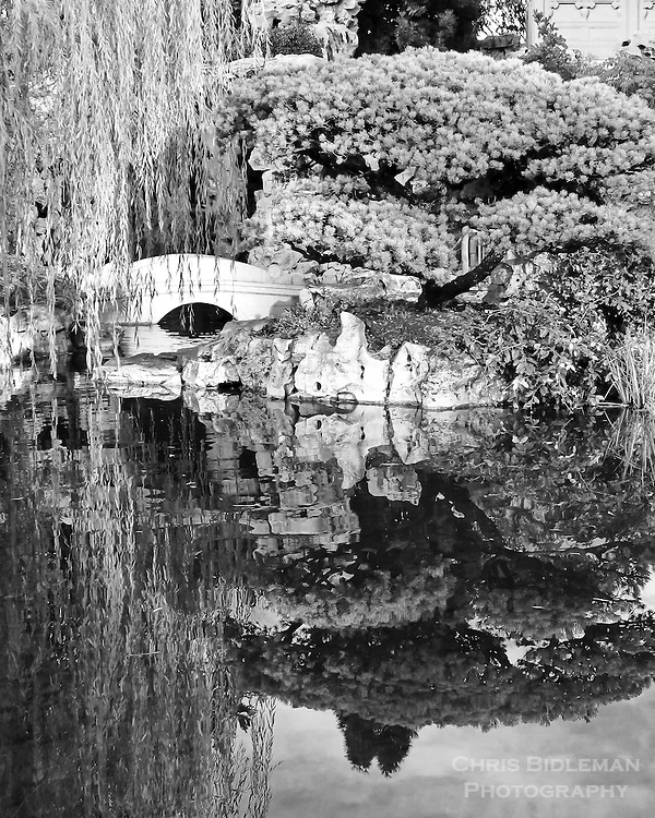Reflection of pine tree, bridge, rocks and weeping willow in lake in Lan Su Chinese Garden in Portland, OR as seen in black & white photo