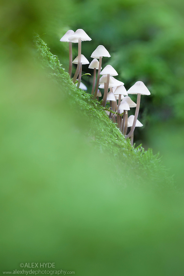 how to stop toadstools growing