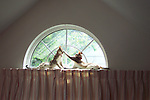 First digital photo I ever captured, 2000. Two Singapura cats lying on curtain rod high in half-moon window.