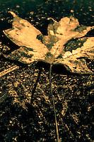 Monochrome Leaf