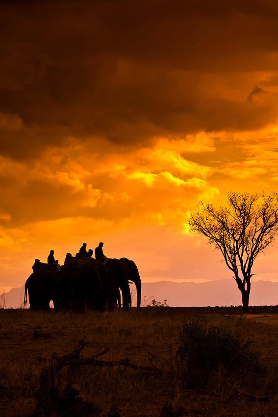 African Elephants, Camp Jabulani, Kapama Private Game Reserve, near Kruger National Park, South Africa
