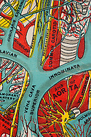 Medical chart of the human body created over 100 years ago showing the inner workings as interpreted by the doctors then. A piece of art in itself depicting an abstract perspective of the miraculous body. Depicted here the arteries surrounding the heart.