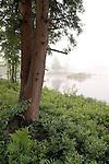 Foggy Morning At Tully Lake
