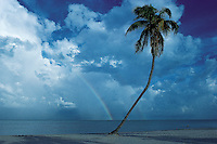 Florida, Palm tree and rainbow, Key Biscayne, Crandan Park Beach.These United States Page 85