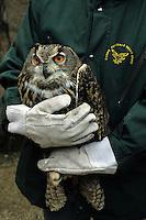 CFS. Recupero Fauna Selvatica. Wild Fauna Recovery