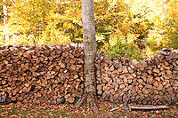 Fire wood cut and stacked at Chamberlin's Ole Forest Inn on Big Manistique Lake near Curtis Michigan in autumn.