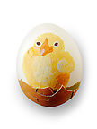 Hand painted chicken eggs with traditional Easter chicks design