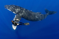 humpback whale, Megaptera novaeangliae, and diver, Pacific Ocean, Model Released: MR-000045