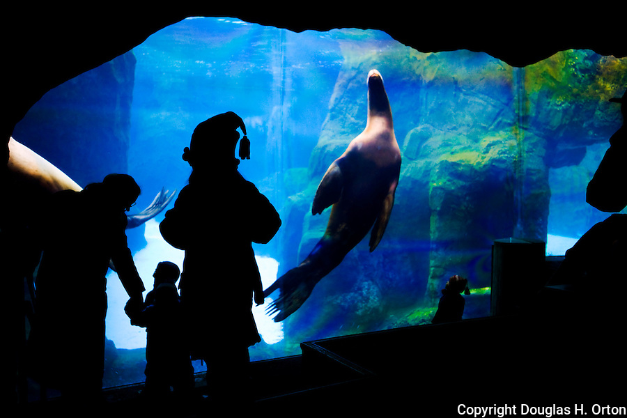 Young Child Watches Seal Exhibit At Aquarium Douglas