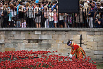 Marking the centenary of the beginning of the First World War (WW1) in 1914, a Tower of London Beefeater adjusts some of the 888,246 ceramic poppies - one for each British military death - created by artist Paul Cummins. Remaining in place until the date of the armistice on November 11th. Across the world, remembrance ceremonies for this historic conflict that affected world nations, London saw many such gestures to remember the millions killed in action at the beginning of the 20th century.