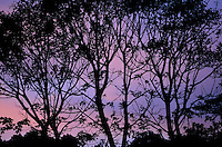 Costa Rican silhouette sunset
