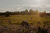 Sardegna 2006