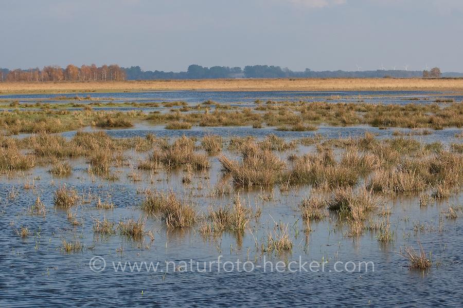 Überschwemmungsfläche, Feuchtgebiet, Feuchtbiotop, Wasserfläche, Tümpel, Feuchtwiese steht unter Wasser, flood area, wetlands, wetland, wet meadow is flooded