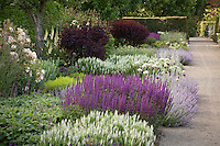 Perennial flower border along gravel path in Filoli formal estate garden