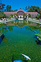 Las Lagunas de las Flores, pools, exotic water lilies, lotus, goldfish and Japanese koi