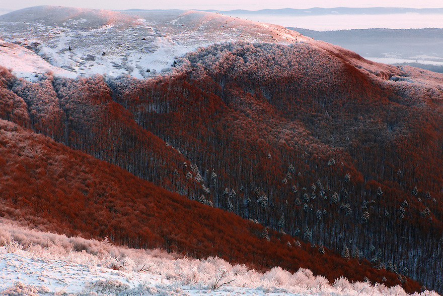 Carpathian beech forest at Wolowy Garb Peak, Bieszczady National Park, Poland