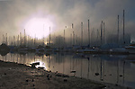 Masts of yachts reflected in the waters, with highrise buildings in the background,English bay, Stanly Park, Vancouver, Canada