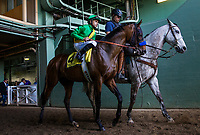 ARCADIA, CA - MARCH 11: Mastery #4, ridden by Mike Smith before the San Felipe Stakes at Santa Anita Park, on March 11, 2017 in Arcadia, California. (Photo by Alex Evers/Eclipse Sportswire/Getty Images)