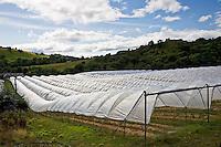 Polytunnels on a fruit farm in Perthshire, Scotland, United Kingdom