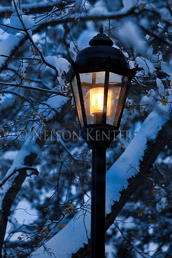 Street Light at dusk in Missoula, Montana with snow covered tree branches