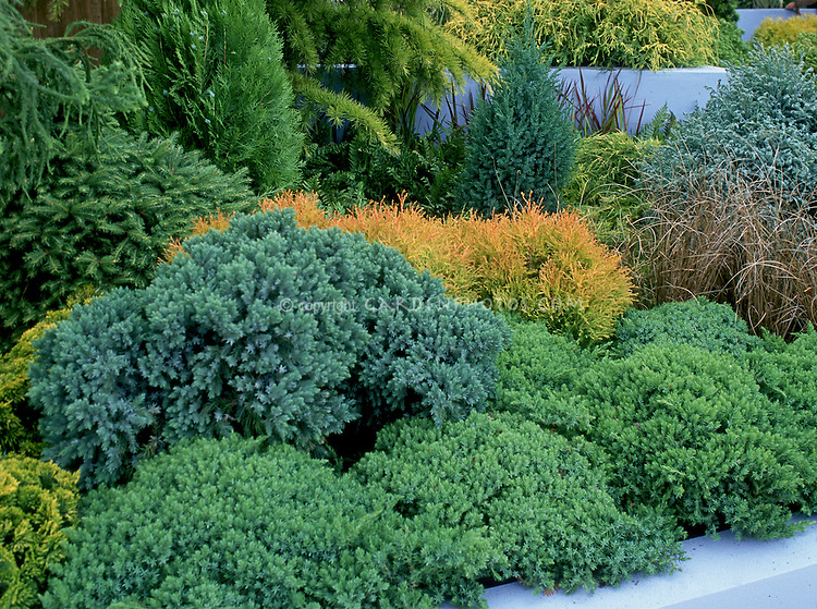 Different kinds of evergreen trees and shrubs planted together