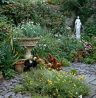 Hens escorted by a black rooster wander freely in this overgrown cobbled walled garden