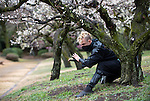 "Ninja Chris  ""Sora"" O'Neil hides among the ume trees in the grounds of Nagoya Castle, Aichi Prefecture Japan on Feb. 23, 2017. O'Neil is one of the eight ninja corps who roam the avenues of the castle and Nagoya Airport, jumping from behind trees and bushes to surprise visitors. ROB GILHOOLY PHOTO"
