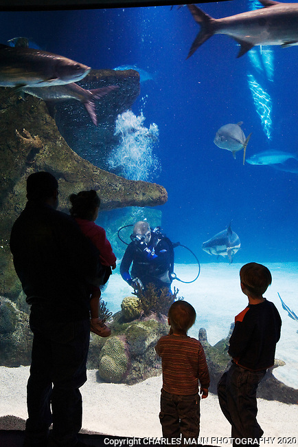 Albuquerque To Santa Fe >> Aquarium_Albuquerque Biopark Diver & Visitors_MANN_6938.tif   Charles Mann Photography