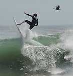 surfer and cormorant