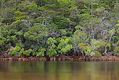 Palétuviers, Nouvelle-Calédonie