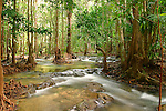 Cascades-Rainforest-Khao-Braang Kraam