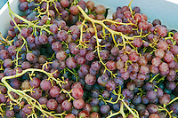A grape is a fruiting berry of the deciduous woody vines of the botanical genus described as Vitis.