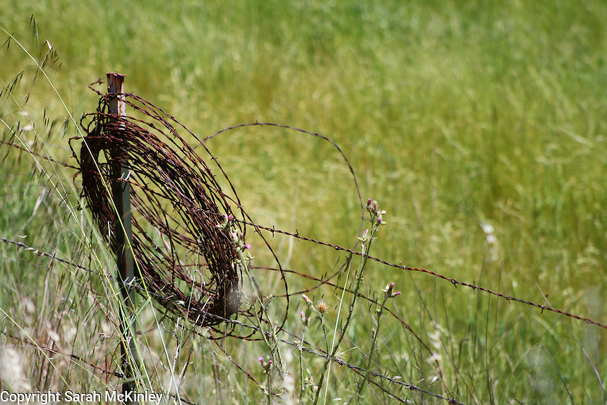 A rusty coil of barbed wire hangs from a fencepost along Reynold's Highway outside of Willits in Mendocino County in Northern California.