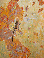 Lizard on wall