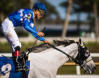 OLDSMAR, FLORIDA - FEBRUARY 11: Tapa Tapa Tapa #3, ridden by Jesus L. Castanon (blue hat), after wining the Suncoast Stakes at Tampa Bay Downs on February 11, 2017 in Oldsmar, Florida (photo by Douglas DeFelice/Eclipse Sportswire/Getty Images)