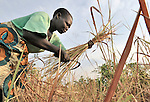 Peresi Nyoka cuts grass to use on the thatched roof of her hut in Yei, Southern Sudan. Ms. Nyoka is a United Methodist.